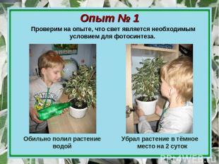 Опыт № 1 Обильно полил растение водой Убрал растение в тёмное место на 2 суток П