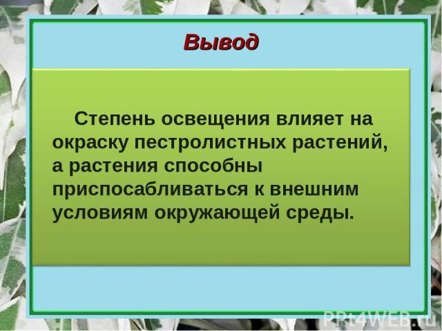 Вывод Степень освещения влияет на окраску пестролистных растений, а растения способны приспосабливаться к внешним условиям окружающей среды.