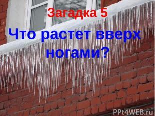 Загадка 5 Что растет вверх ногами?