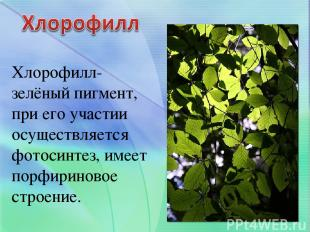 Хлорофилл- зелёный пигмент, при его участии осуществляется фотосинтез, имеет пор