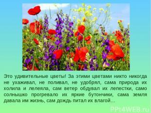 Это удивительные цветы! За этими цветами никто никогда не ухаживал, не поливал,