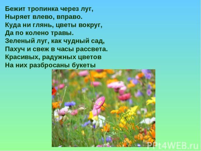 Бежит тропинка через луг, Ныряет влево, вправо. Куда ни глянь, цветы вокруг, Да по колено травы. Зеленый луг, как чудный сад, Пахуч и свеж в часы рассвета. Красивых, радужных цветов На них разбросаны букеты