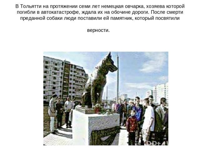 В Тольятти на протяжении семи лет немецкая овчарка, хозяева которой погибли в автокатастрофе, ждала их на обочине дороги. После смерти преданной собаки люди поставили ей памятник, который посвятили верности.