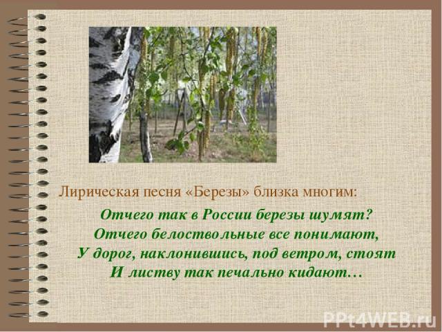 Лирическая песня «Березы» близка многим: Отчего так в России березы шумят? Отчего белоствольные все понимают, У дорог, наклонившись, под ветром, стоят И листву так печально кидают…