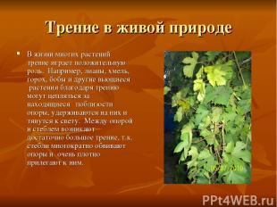Трение в живой природе В жизни многих растений трение играет положительную роль.