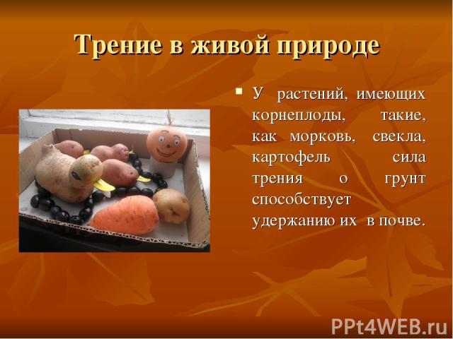 Трение в живой природе У растений, имеющих корнеплоды, такие, как морковь, свекла, картофель сила трения о грунт способствует удержанию их в почве.