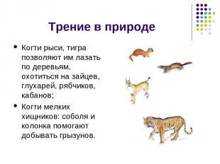 Трение в природе Когти рыси, тигра позволяют им лазать по деревьям, охотиться на