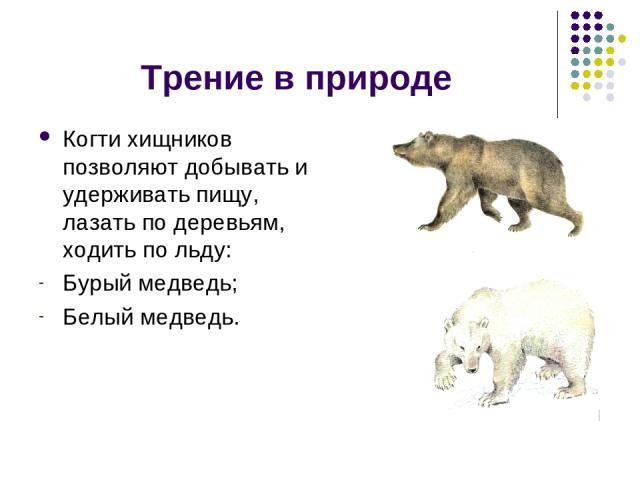 Трение в природе Когти хищников позволяют добывать и удерживать пищу, лазать по деревьям, ходить по льду: Бурый медведь; Белый медведь.