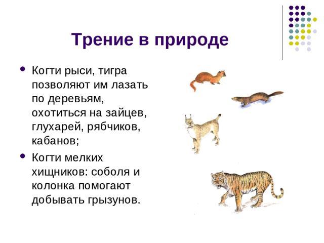 Трение в природе Когти рыси, тигра позволяют им лазать по деревьям, охотиться на зайцев, глухарей, рябчиков, кабанов; Когти мелких хищников: соболя и колонка помогают добывать грызунов.
