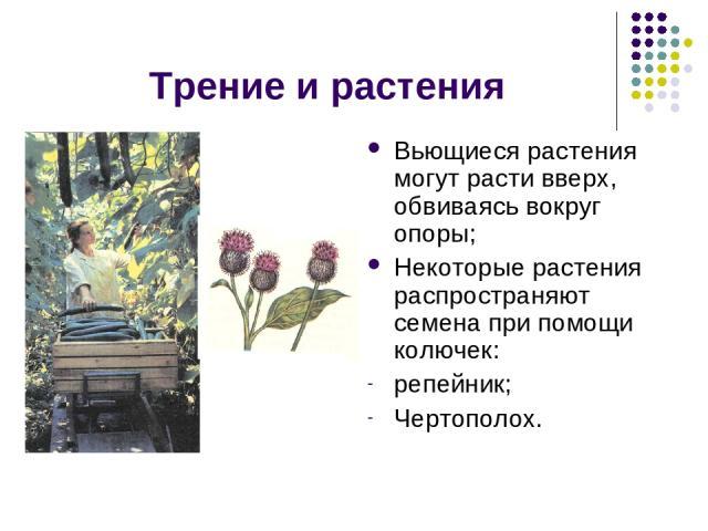 Трение и растения Вьющиеся растения могут расти вверх, обвиваясь вокруг опоры; Некоторые растения распространяют семена при помощи колючек: репейник; Чертополох.