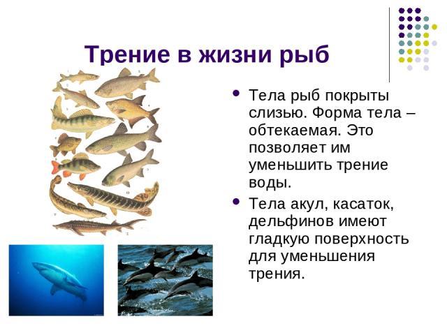 Трение в жизни рыб Тела рыб покрыты слизью. Форма тела – обтекаемая. Это позволяет им уменьшить трение воды. Тела акул, касаток, дельфинов имеют гладкую поверхность для уменьшения трения.
