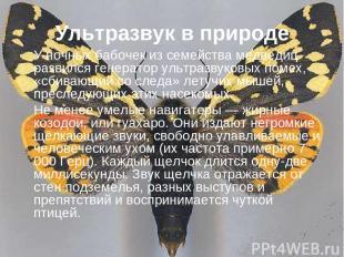 Ультразвук в природе У ночных бабочек из семейства медведиц развился генератор у