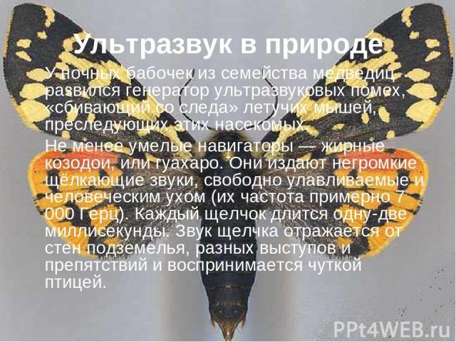 Ультразвук в природе У ночных бабочек из семейства медведиц развился генератор ультразвуковых помех, «сбивающий со следа» летучих мышей, преследующих этих насекомых. Не менее умелые навигаторы — жирные козодои, или гуахаро. Они издают негромкие щёлк…