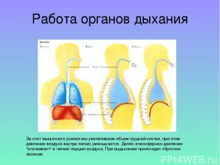 За счет мышечного усилия мы увеличиваем объем грудной клетки, при этом давление