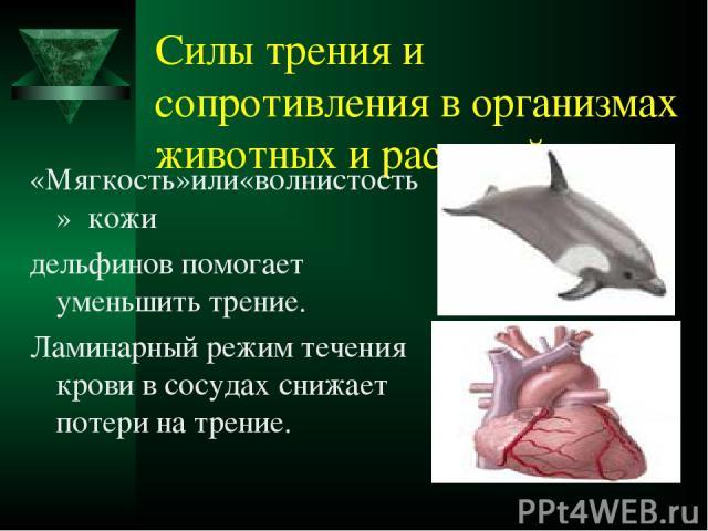 Силы трения и сопротивления в организмах животных и растений «Мягкость»или«волнистость» кожи дельфинов помогает уменьшить трение. Ламинарный режим течения крови в сосудах снижает потери на трение.
