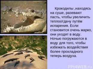 Крокодилы ,находясь на суше, разевают пасть, чтобы увеличить теплоотдачу путём и