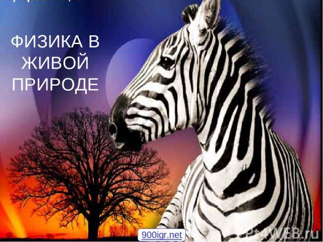 ФИЗИКА В ЖИВОЙ ПРИРОДЕ 900igr.net