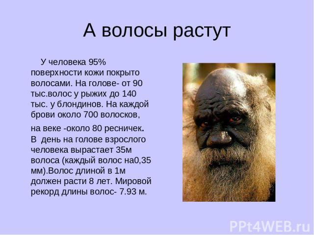 А волосы растут У человека 95% поверхности кожи покрыто волосами. На голове- от 90 тыс.волос у рыжих до 140 тыс. у блондинов. На каждой брови около 700 волосков, на веке -около 80 ресничек. В день на голове взрослого человека вырастает 35м волоса (к…