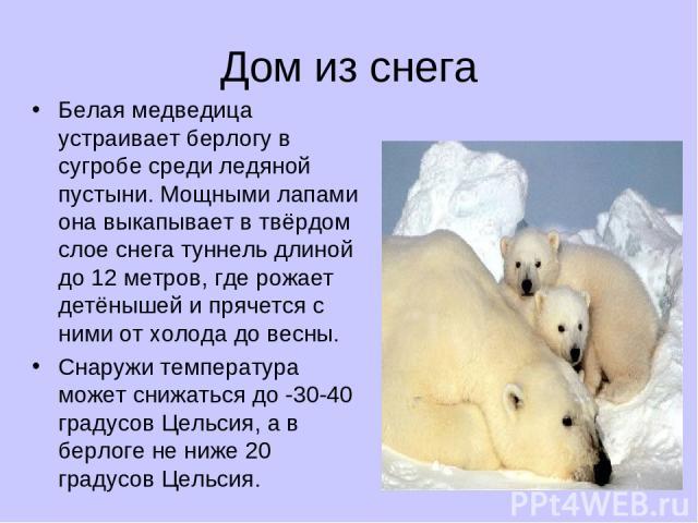 Дом из снега Белая медведица устраивает берлогу в сугробе среди ледяной пустыни. Мощными лапами она выкапывает в твёрдом слое снега туннель длиной до 12 метров, где рожает детёнышей и прячется с ними от холода до весны. Снаружи температура может сни…