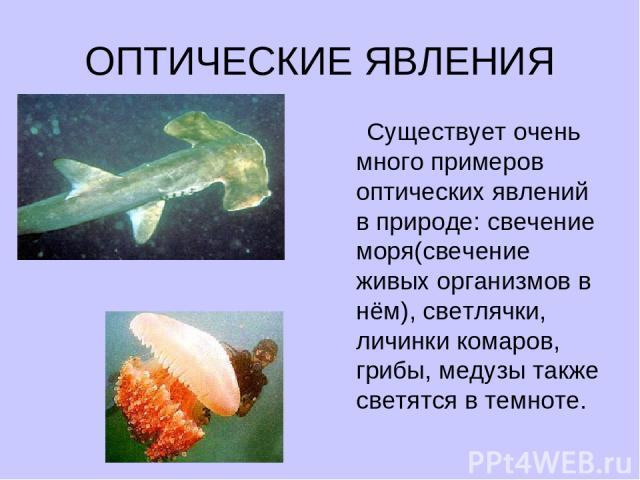 ОПТИЧЕСКИЕ ЯВЛЕНИЯ Существует очень много примеров оптических явлений в природе: свечение моря(свечение живых организмов в нём), светлячки, личинки комаров, грибы, медузы также светятся в темноте.