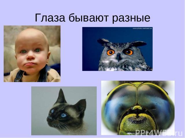 Глаза бывают разные