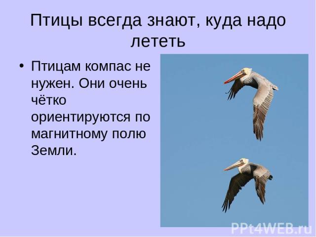 Птицы всегда знают, куда надо лететь Птицам компас не нужен. Они очень чётко ориентируются по магнитному полю Земли.
