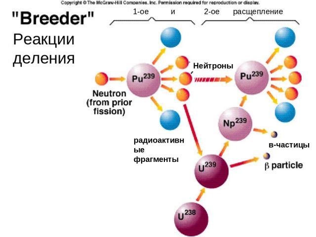 Нейтроны в-частицы радиоактивные фрагменты 1-ое и 2-ое расщепление Реакции деления