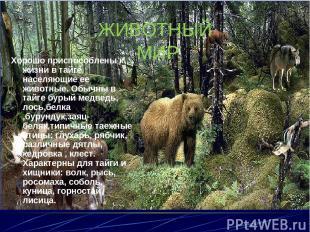 ЖИВОТНЫЙ МИР Хорошо приспособлены к жизни в тайге населяющие ее животные. Обычны