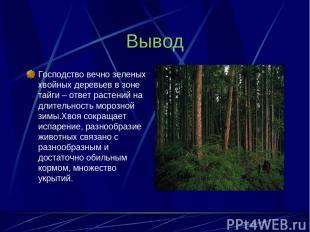 Вывод Господство вечно зеленых хвойных деревьев в зоне тайги – ответ растений на
