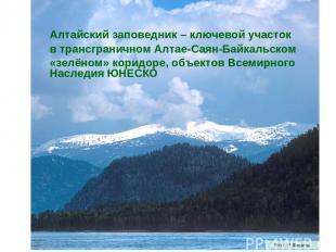 Алтайский заповедник – ключевой участок в трансграничном Алтае-Саян-Байкальском