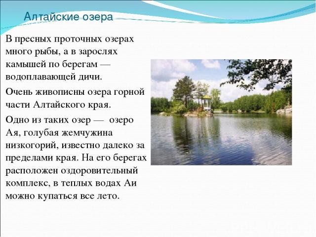 Алтайские озера В пресных проточных озерах много рыбы, а в зарослях камышей по берегам — водоплавающей дичи. Очень живописны озера горной части Алтайского края. Одно из таких озер — озеро Ая, голубая жемчужина низкогорий, известно далеко за пределам…