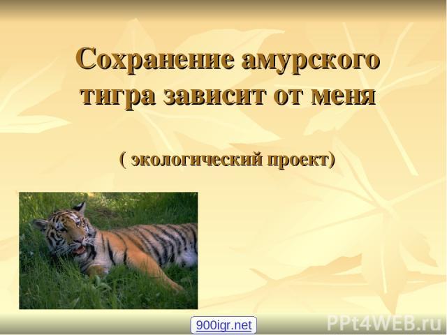 Сохранение амурского тигра зависит от меня ( экологический проект) 900igr.net
