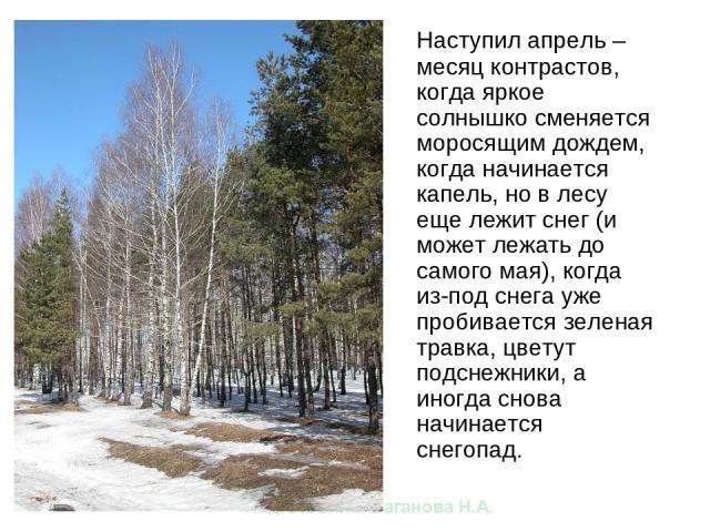 Наступил апрель – месяц контрастов, когда яркое солнышко сменяется моросящим дождем, когда начинается капель, но в лесу еще лежит снег (и может лежать до самого мая), когда из-под снега уже пробивается зеленая травка, цветут подснежники, а иногда сн…