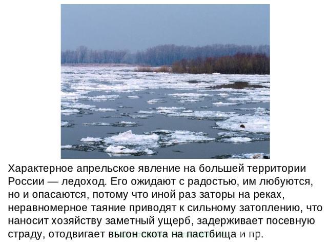 Характерное апрельское явление на большей территории России — ледоход. Его ожидают с радостью, им любуются, но и опасаются, потому что иной раз заторы на реках, неравномерное таяние приводят к сильному затоплению, что наносит хозяйству заметный ущер…