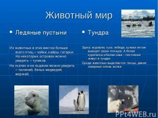 Животный мир Ледяные пустыни Из животных в этих местах больше всего птиц – чайки
