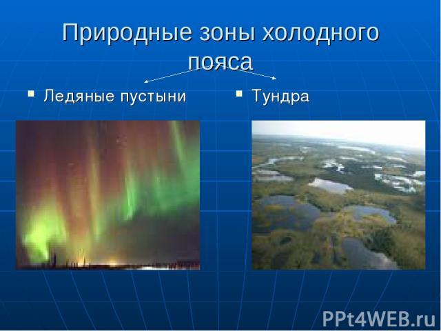 Природные зоны холодного пояса Ледяные пустыни Тундра