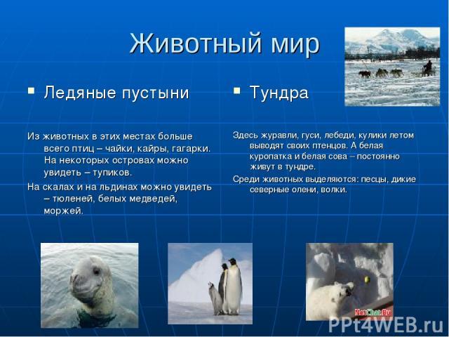 Животный мир Ледяные пустыни Из животных в этих местах больше всего птиц – чайки, кайры, гагарки. На некоторых островах можно увидеть – тупиков. На скалах и на льдинах можно увидеть – тюленей, белых медведей, моржей. Тундра Здесь журавли, гуси, лебе…