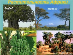 баобаб пальмы секвойи Растительность Африки бананы
