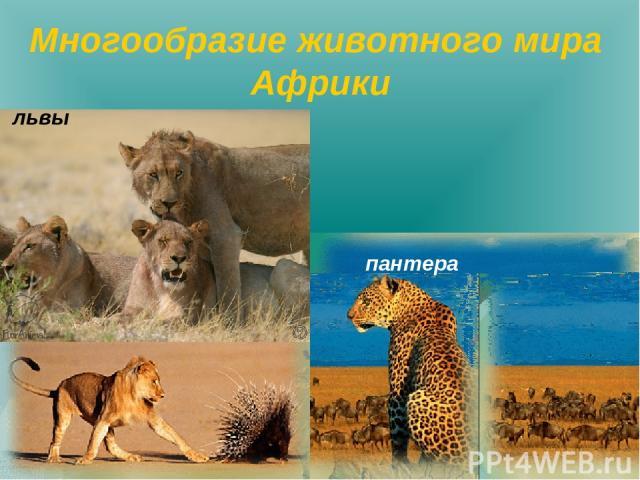 Многообразие животного мира Африки львы пантера