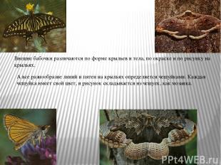 Внешне бабочки различаются по форме крыльев и тела, по окраске и по рисунку на к
