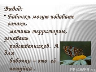 Вывод: Бабочки могут издавать запахи, метить территорию, узнавать родственников.