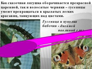 Как сказочная лягушка оборачивается прекрасной царевной, так и волосатые червяки