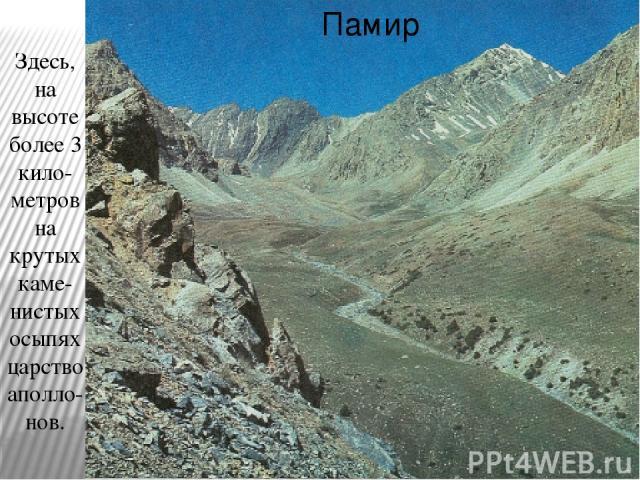 Памир Здесь, на высоте более 3 кило-метров на крутых каме-нистых осыпях царство аполло-нов.