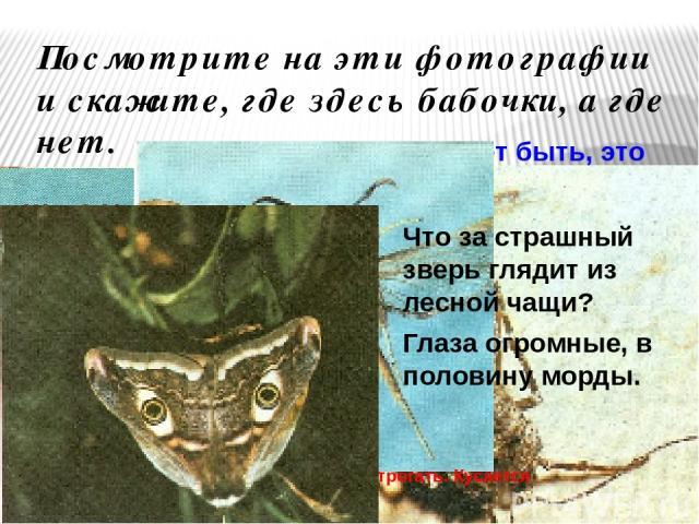 Посмотрите на эти фотографии и скажите, где здесь бабочки, а где нет. Может быть, это паук, который строит из паутины сети и ловит мух? Или клещ, который впивается в тело и сосет кровь? Ну а это, конечно, оса!? Жук? Не жук? Таракан? Не таракан.Кто б…