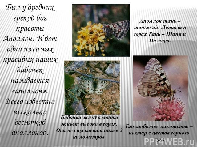 Был у древних греков бог красоты Аполлон. И вот одна из самых красивых наших бабочек называется «аполлон». Всего известно несколько десятков аполлонов. Бабочка жакъямонта живет высоко в горах. Она не спускается ниже 3 километров. Аполлон тянь – шань…