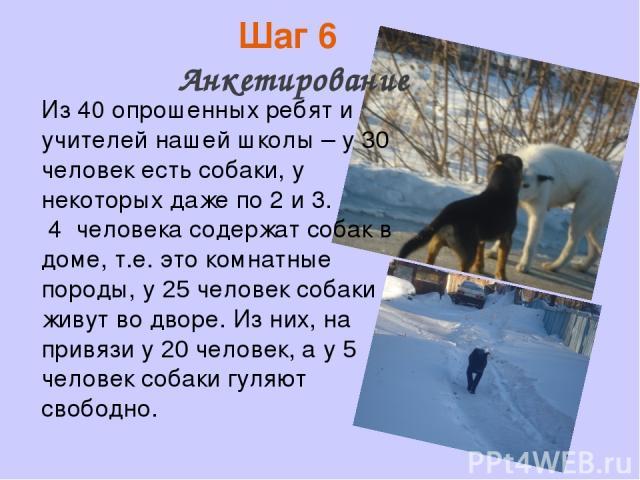 Шаг 6 Анкетирование Из 40 опрошенных ребят и учителей нашей школы – у 30 человек есть собаки, у некоторых даже по 2 и 3. 4 человека содержат собак в доме, т.е. это комнатные породы, у 25 человек собаки живут во дворе. Из них, на привязи у 20 человек…
