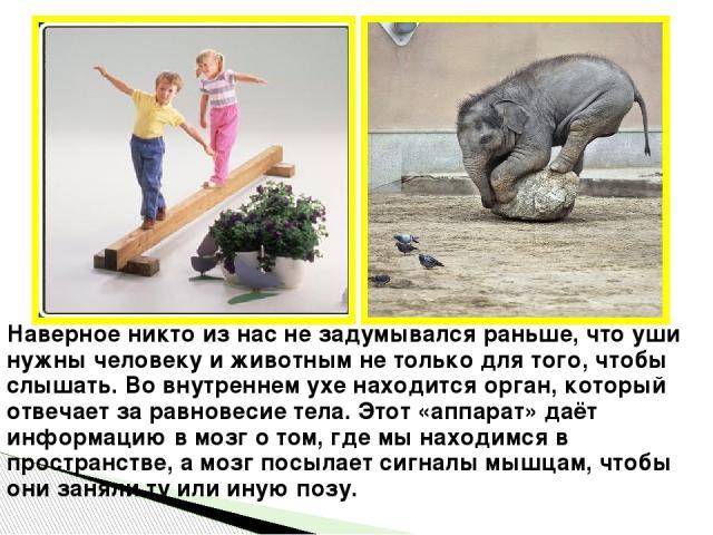 Интернет ресурсы: http://hq-wallpapers.ru/wallpapers/animals/pic32707_raz1280x800 http://foretime.ru/pamyatnik-yhy/ http://www.phenomenonsofhistory.com/site/?p=14556 http://svetiteni.com.ua/2012/01/page/1843/ http://www.diary.ru/~diemaus/p71740150.h…