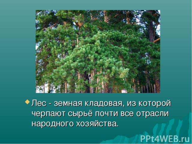Лес - земная кладовая, из которой черпают сырьё почти все отрасли народного хозяйства.
