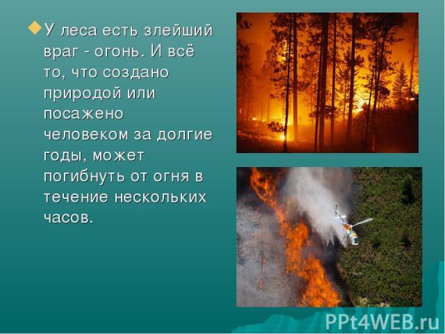 У леса есть злейший враг - огонь. И всё то, что создано природой или посажено человеком за долгие годы, может погибнуть от огня в течение нескольких часов.