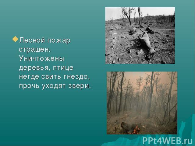 Лесной пожар страшен. Уничтожены деревья, птице негде свить гнездо, прочь уходят звери.
